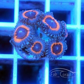 Zoanthus alien antivenom Z429
