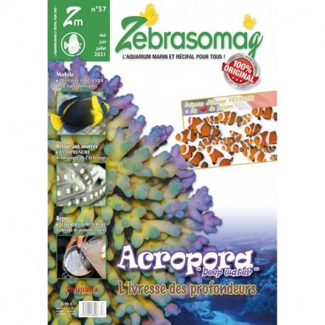 Zebrasomag n°56